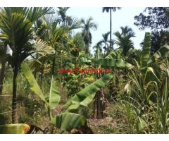 7 Acres Agri land for sale 15 KMS from Sringeri