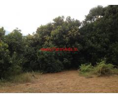 225 Acres Mango Farm for sale in Tirunelveli