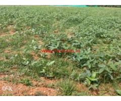 2.5 Acres Farm Land for sale in Nanjangud.