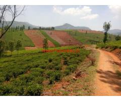 3 Acres Tea Estate for sale in Doddabetta -- Ooty