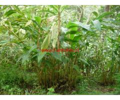 5 Acres Cardamom farm with Farm House for sale Idukki Ramkalkkhede