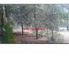 5 acre river facing spice garden for sale near Vayalkara, Ernakulam