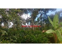 3 Acres Cardamom Estate for sale near Munnar - Idukki