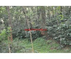 2 Acres Coffee Estate for sale near Mallandur Road - Chikmagalur.