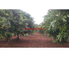5.5 Acres Mango Farm for sale near Vayalpadu Mandal - Tirupathy