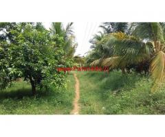 17 Acres Mango Farm for sale at Rajapalayam - Virudhunagar