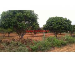 7.5 Acres Mango Grove for sale in Sodam Mandal -  Chitoor