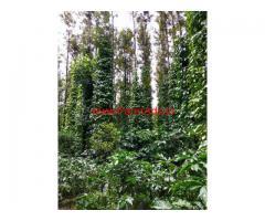 9.18 Acres Coffee Plantation for sale neat Kodlipete - Somwarpete