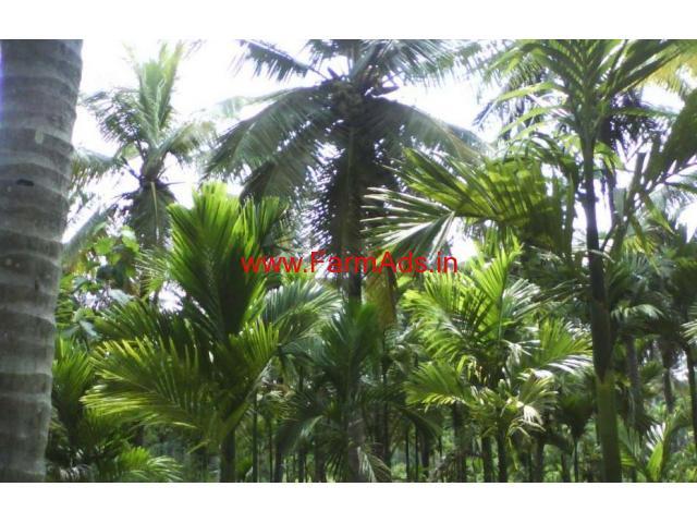 1.26 acres Arecanut Farm for sale near Kudligere near Bhadravathi