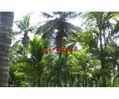 1.26 acres Arecanut Farm for sale near Kudligere near Bhadravathi