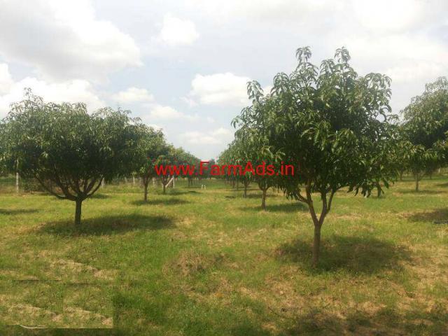 1.5 Acres Mango Farm for sale in Pileru - Chitoor
