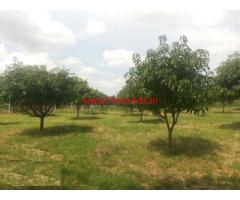1.5 Acres Mango Farm for sale in Pileru - Chitoor