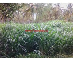 2 Acres Agriculture Land attached to river for sale at Chennapatna
