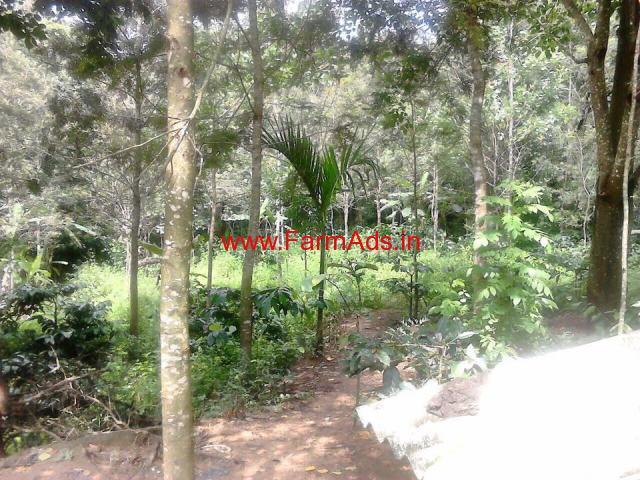 3.5 Acres Coffee Estate for sale at Aldur - Chikmagalur