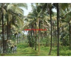 1.36 Acres Coconut Farm for sale at Sathenahalli Gate - Gubbi