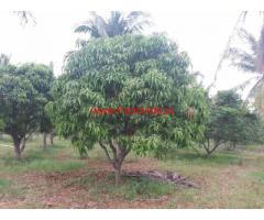 48 acres coconut - mango plantation for sale at Hosdurga