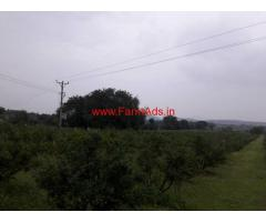 6 Acres Pomegranate Farm land for sale in Sira - Tumkur