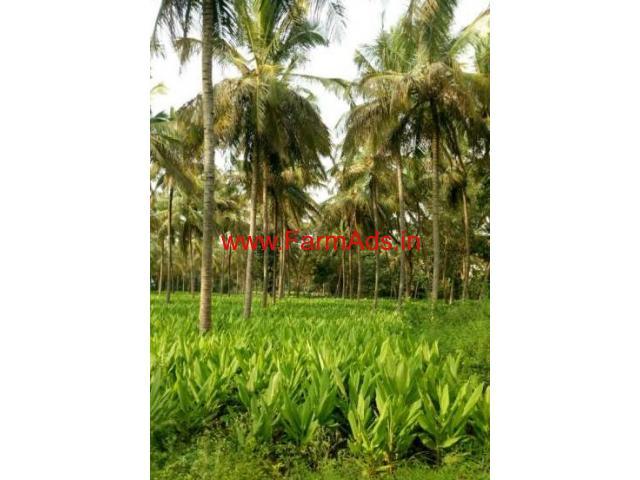 15 Acres Coconut Farm for sale near Nanjangud