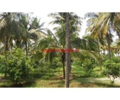 9 Acre Coconut Groove for sale Govindapuram Highway , Chittur, Palakkad