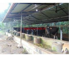 1.42 Acres Cattle and Fish Farm for sale at Kumbanad - Pathanamthitta