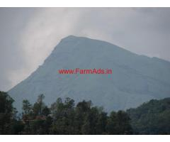 Well maintained coffee estate with a great view- chikkamagalur