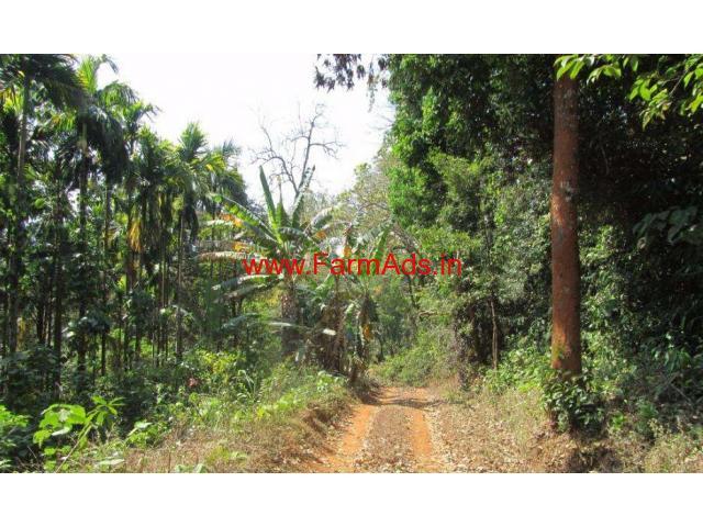 6.23 Acre Areca Farm Land for sale at Kumta