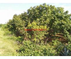 12 acres mango farm land available for sale at kodur - Kadapa