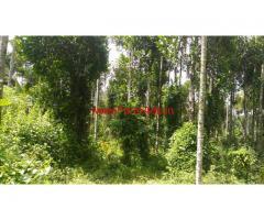 1.87 Acres Coffee Land for sale in Kalpetta - wayanad