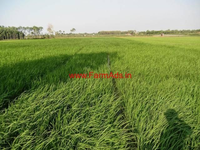 120 acres agriculture land for sale at Arani - Thiruvanamalai