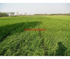120 acres agriculture land for sale at Arani - Thiruvanamalai