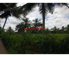 1.5 acres of farm land for sale 14 kms from Mysore in gaddige road