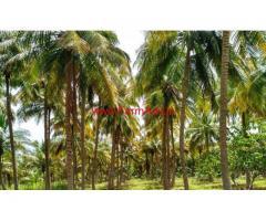 4.5 Acre Coconut Farm Land For Sale in Near Athur, Dindigul(dt).