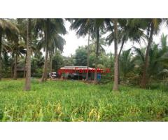 2.5 Acre Coconut Farm for sale at Chittur - Palakkad