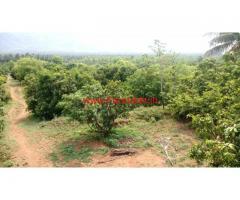 10 Acre Mango Farm for sale at Vathalakundu - Dindigul