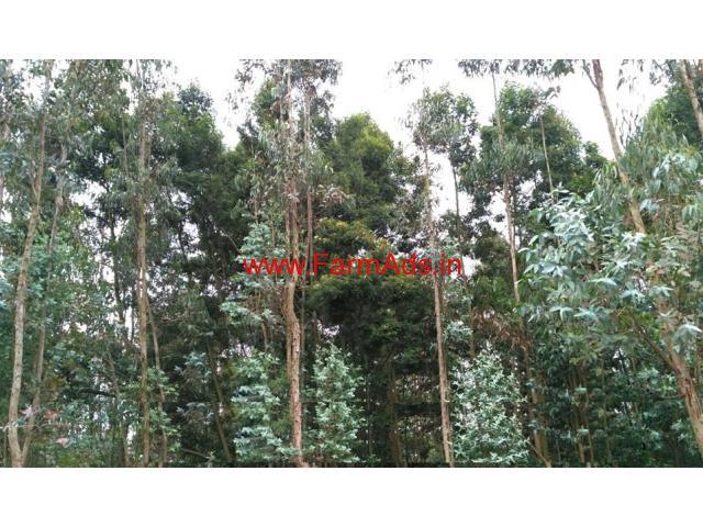 3 Acre eucalyptus trees farm land for sale in kodaikanal