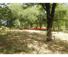 16 Acres Tamarind Tree Farm Land for sale at Lepakshi
