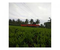 4.30 Acres Coconut Farm Land for sale at Ayyanapura, Chamrajanagar