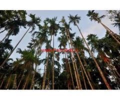 1.10 Acre Areca Estate for sale at Salethor - Bantwal