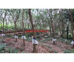 7 Acre Rubber Estate for sale at Vttal - Mangalore