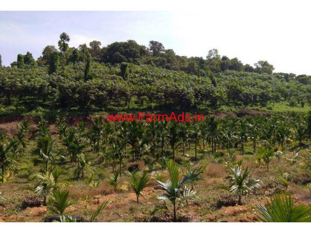 10 Acres Areca and Rubber Estate for sale at Punjalkatte - Belthangady