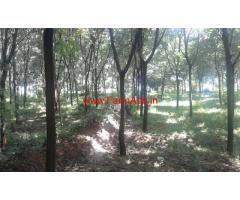 5 Acres Rubber Plantation for sale at Wayanad.