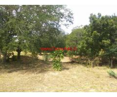 13 acres tamarind trees farm for sale at chilmathur - Ananthapur