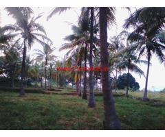 3 acre coconut farm land for sale near Magadi