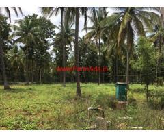 20 Acres Coconut Farm for sale at Holalkere - Chitradurga