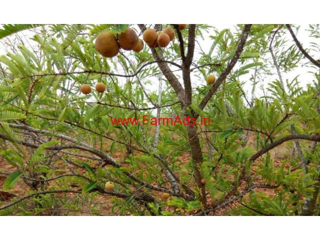 13 acres beautiful farm land for sale near berigai hosur.
