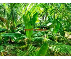 2 Acre 72 Cents Farm Land for sale near Bathalagundu - Dindigul