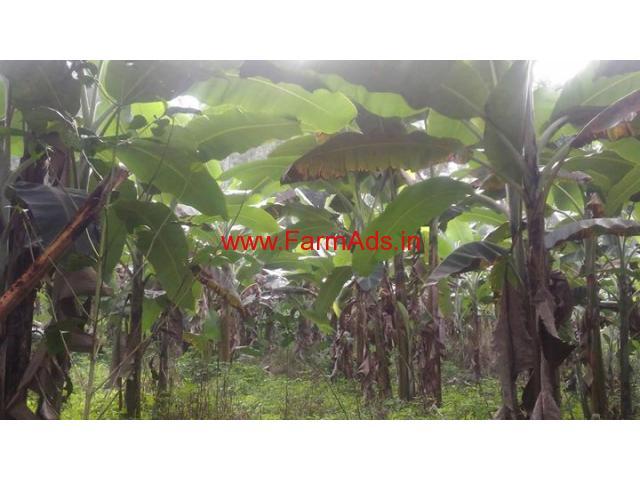2 Acres Banana Farm for sale at KC Patti - Kodaikanal