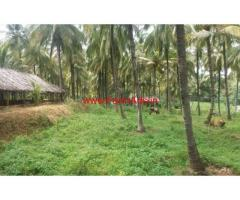 10 Acres Coconut Plantation for sale at Chittur - Palakkad