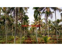 5.5 Acre Coconut Farm for sale near KB Cross, Chikkanayakanahalli