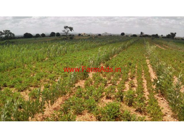 2.5 Acres Agriculture land for sale in Bagepalli.